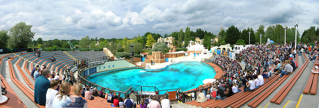 dolphins' pool at the Asterix park