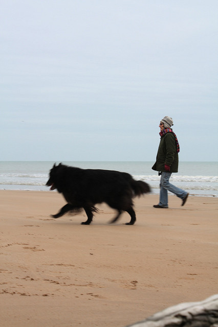 Dog at Omaha beach